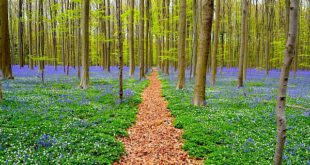 Hallerbos 2020: Top Places to Visit in Belgium