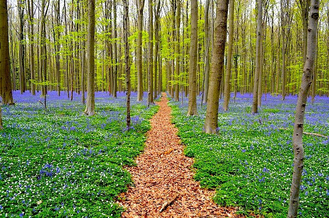 Top Places to Visit in Belgium: Hallerbos