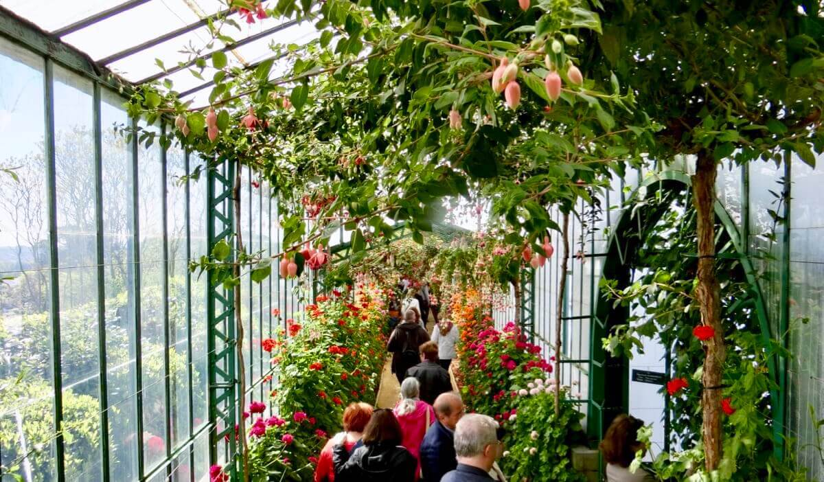 Geranium Greenhouse Gallery @ Serres Royales de Laeken