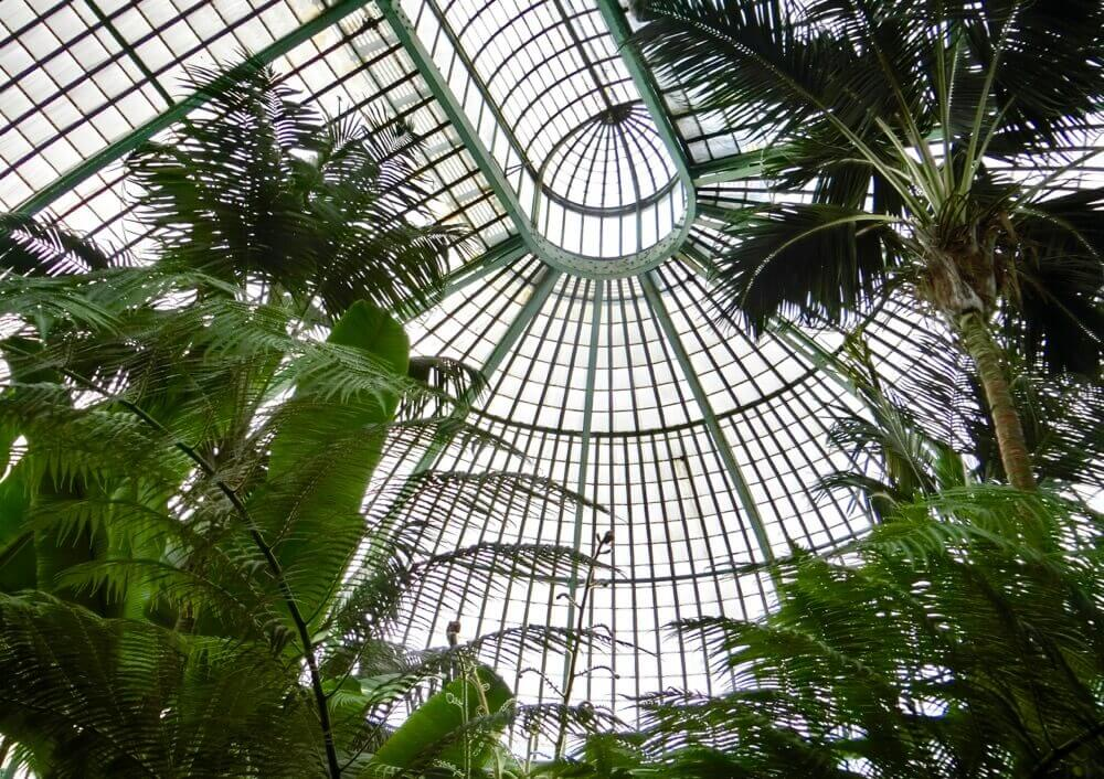 Palm Greenhouse Ceiling @ Royal Greenhouses Laeken