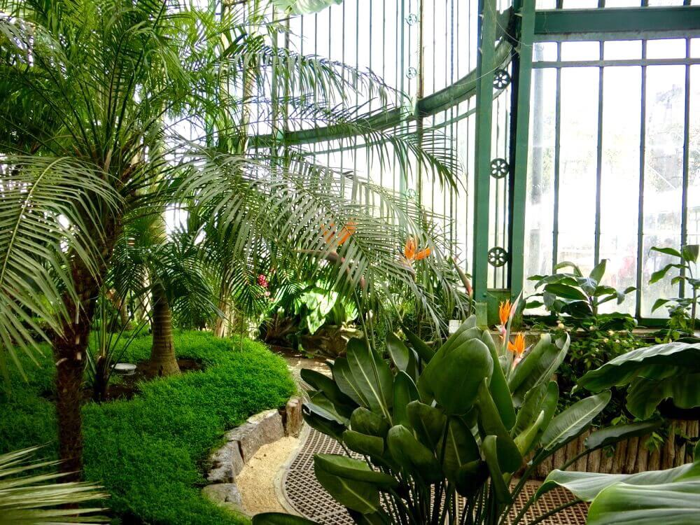 Palm Greenhouse Interior @ Royales Serres de Laeken