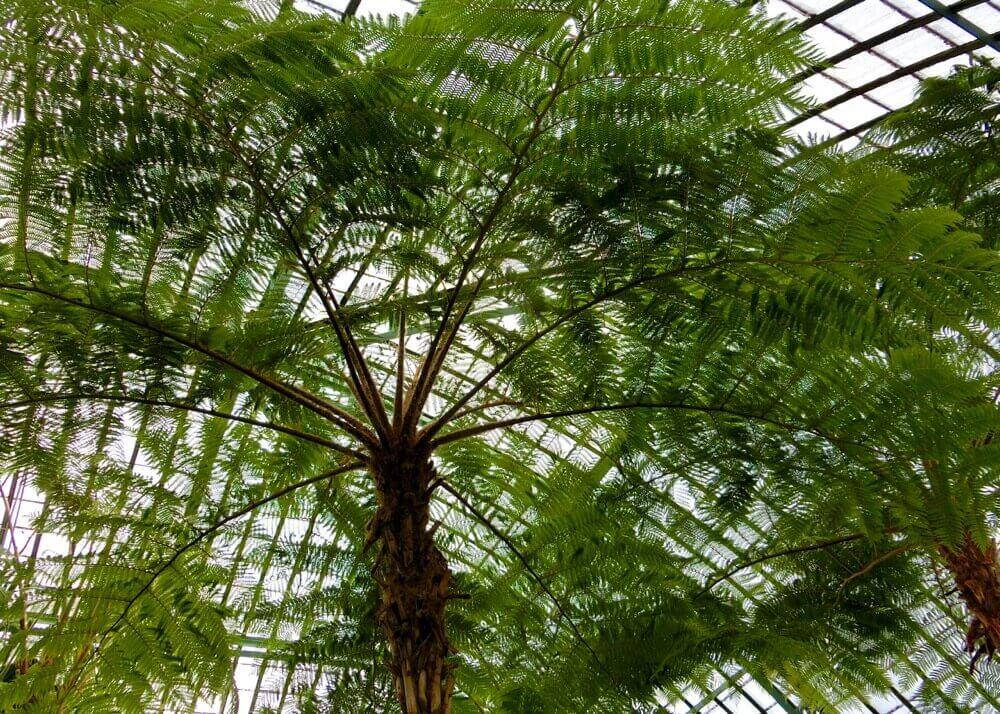 Palm Greenhouse @ Koninklijke Serres van Laken