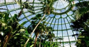 Winter Garden at Royal Greenhouses of Laeken