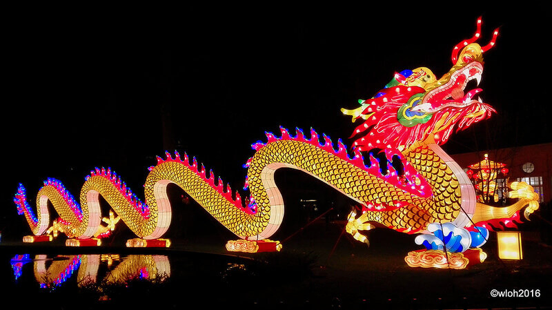 Where to Go in Belgium: China Light Zoo Antwerpen