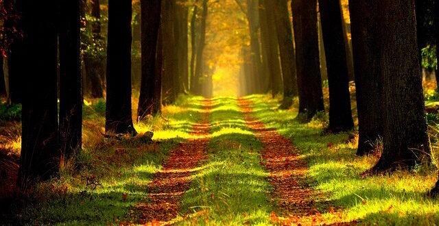 Forest Week Belgium: Things to Do in Belgium in October